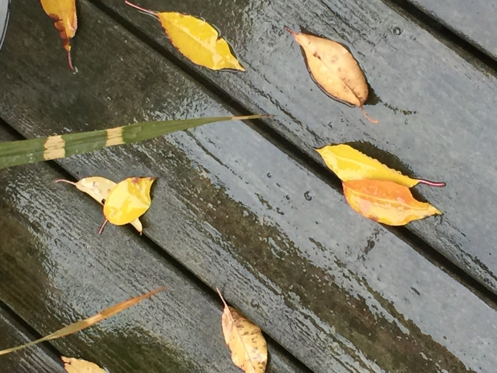 Rainy leaves